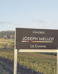 Joseph Mellot - Capture_SANCERRE 1017_128